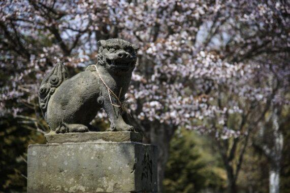 狛犬の写真