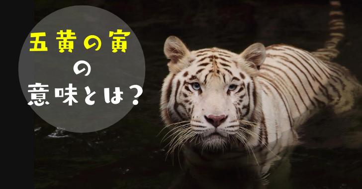 白い虎の写真