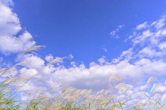 秋空とススキの写真