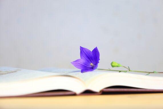 桔梗と本の写真