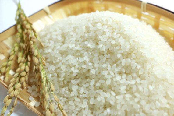 お米と稲穂の写真