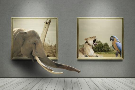 額と動物の写真
