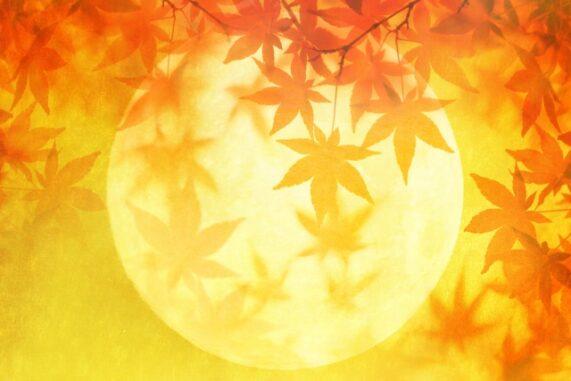 紅葉と月の写真