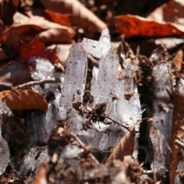 霜柱の写真