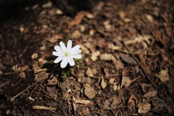 土と花の写真