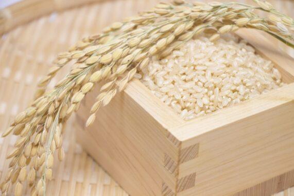 稲穂と玄米の写真