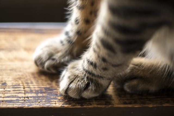 猫の前足の写真