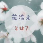 桜と雪の写真