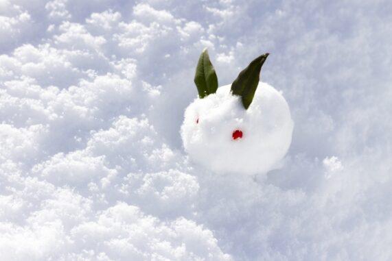 雪うさぎの写真
