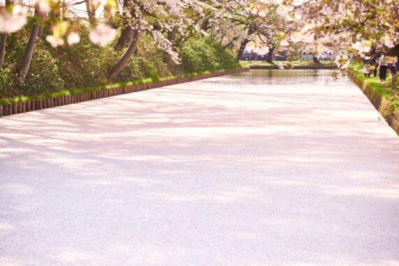 弘前公園の桜の絨毯写真