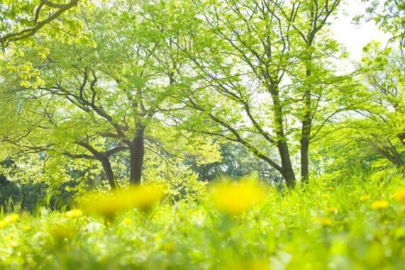 春の草木の写真