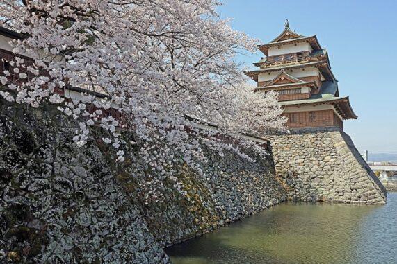 徳島城と桜の写真