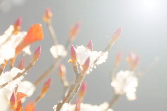 雪と暖かな日差しの写真