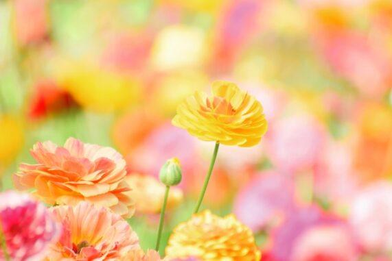 かわいいお花畑の写真