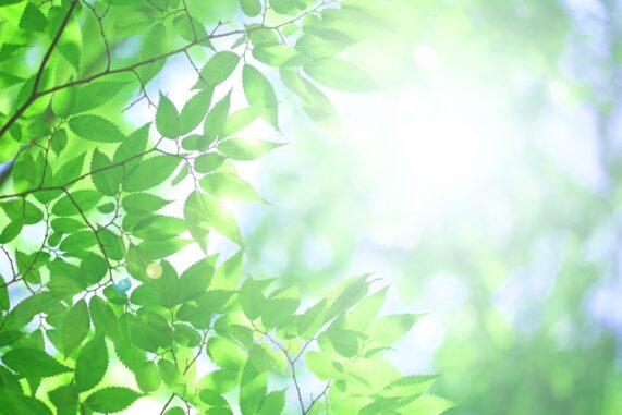 光に照らされる木々の写真