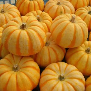 プッチーニかぼちゃの写真