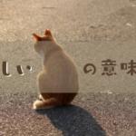さみしい背中の猫の写真