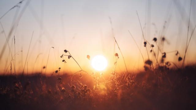 太陽と冬の植物の写真